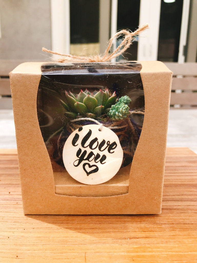 Giftboxed succulent